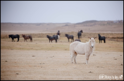 Hestaleiga Lækur Horse Rental Hella Iceland Things to Do Iceland Wedding Planner
