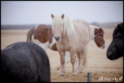 Horse Riding Adventure Mount Hekla Hotel Laekur Hella Iceland