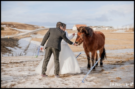 Bride and Groom with Icelandic Horses Photos by Miss Ann