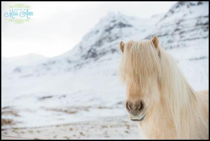 Iceland Wedding Photographer Snaefellsnes Peninsulaj-1pg
