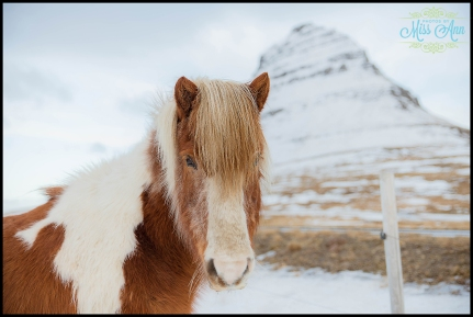Iceland Wedding Photographer Snaefellsnes Peninsulajpg
