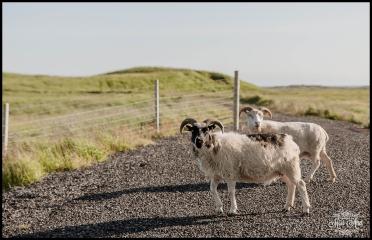Dyrholaey Cliffs Iceland Wedding Photographer 10