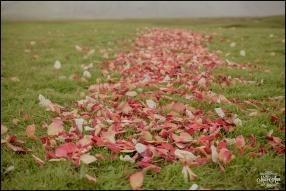 Flyboy Naturals Rose Petals Iceland Wedding Details