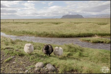 Iceland Wedding Photographer-19