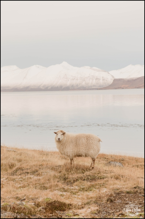 Iceland Western Fjords Wedding - Iceland Wedding Planner